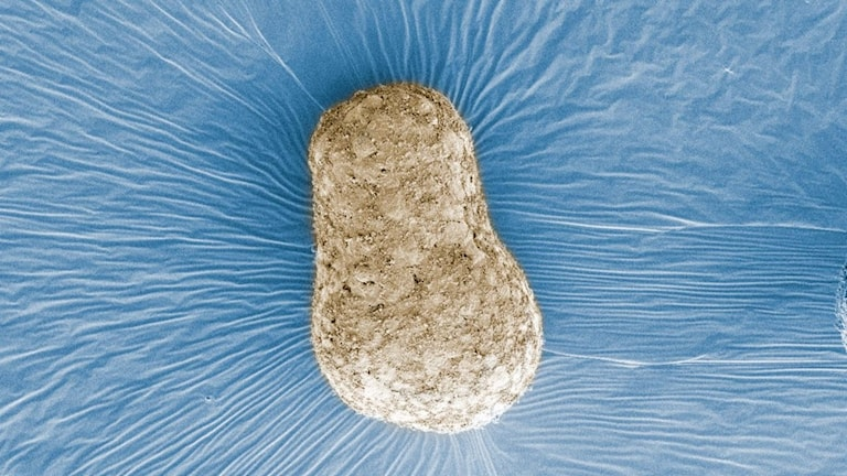 Liten päronformad, oregelbunden klump.