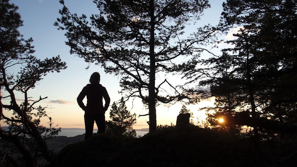 En kvinna på skogspromenad betraktar solnedgången bland träden.