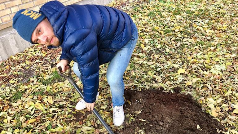 Jonatan Klaminder gräver i jorden.