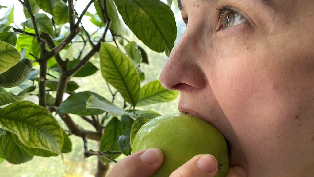 Äpple och annan frukt bra för minnet