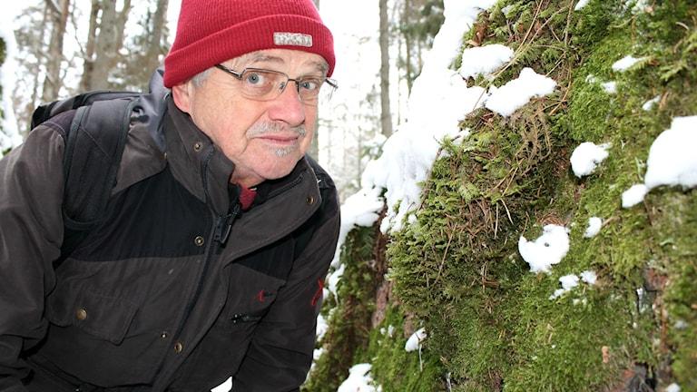 Tomas Hallingbäck, mossexpert på Artdatabanken, vid en mossig sten.