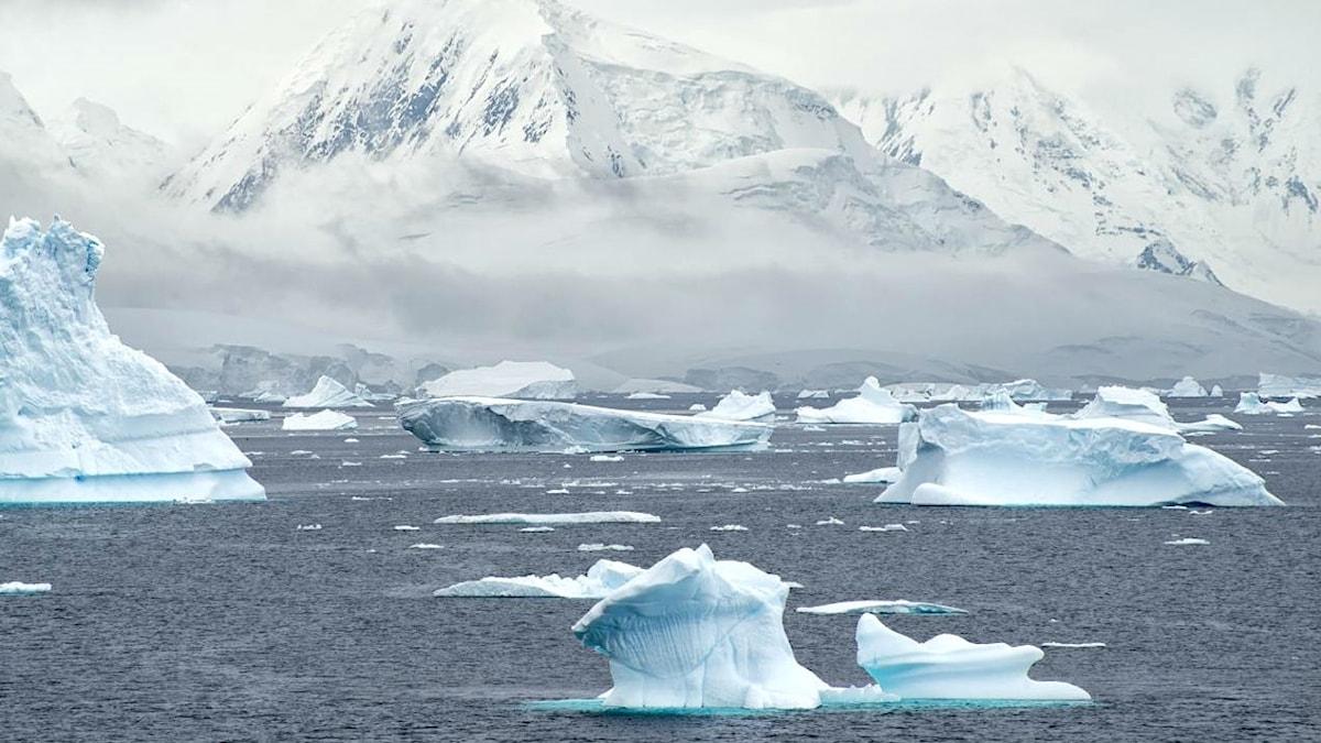 Antarktis kust med berg i bakgrunden och flytande isberg i havet.