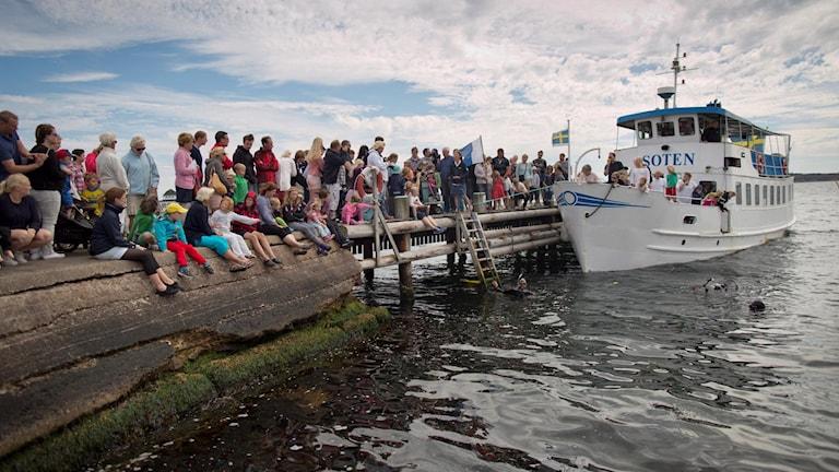 Havets Hus släpper ut två småfläckiga rödhajar i Gullmarsfjorden.