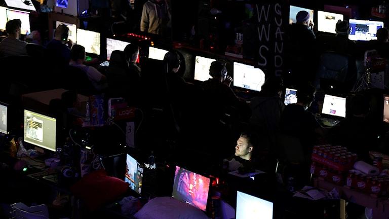 Rader med dataskärmar och dataspelande personer syns i ett mörkt rum under en dataspelsfest i norska Hamar.