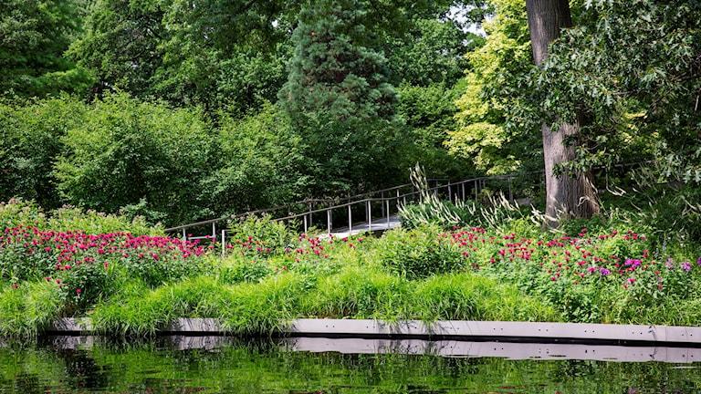 En damm i förgrunden och vild grönska, träd och blommor bortom den.