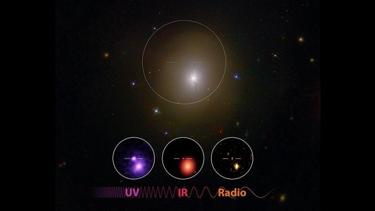 Bild som visar UV-, IR- och radiovågor