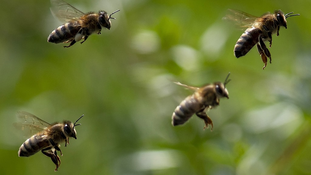 flygande bin