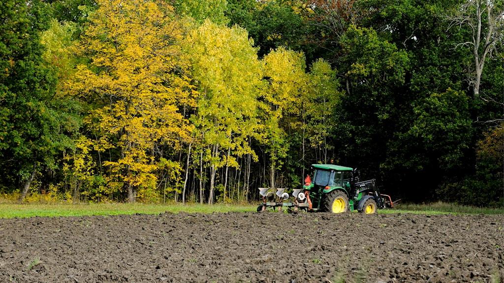 bonde plöjer med traktor på åker