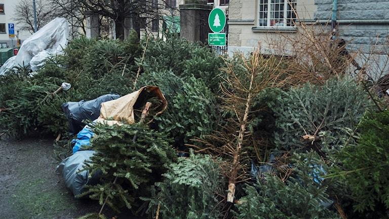 Uppsamlingsplats för gamla julgranar i Stockholm