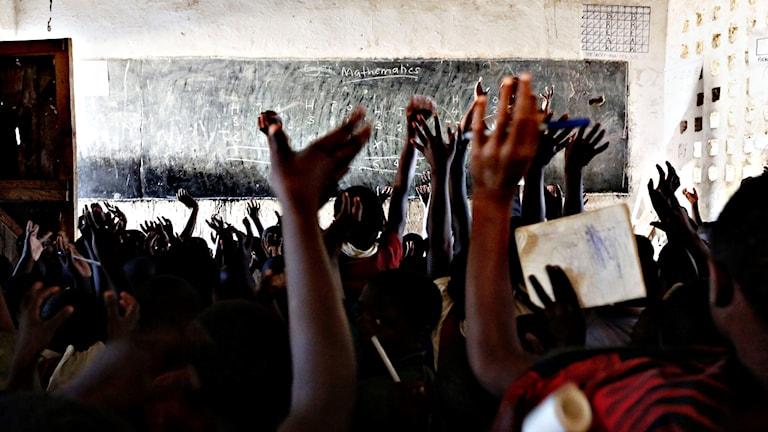 Flera elever räcker upp händerna i ett klassrum.