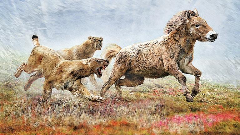 illustration av två sabeltandade katter som jagar en urtida häst