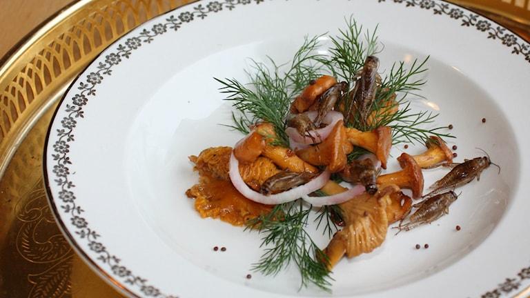 En servering med kantareller och tillagade syrsor.