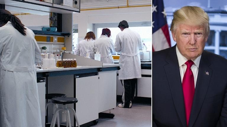 Forskare står med ryggen vänd mot kameran och en bild på president Trump.