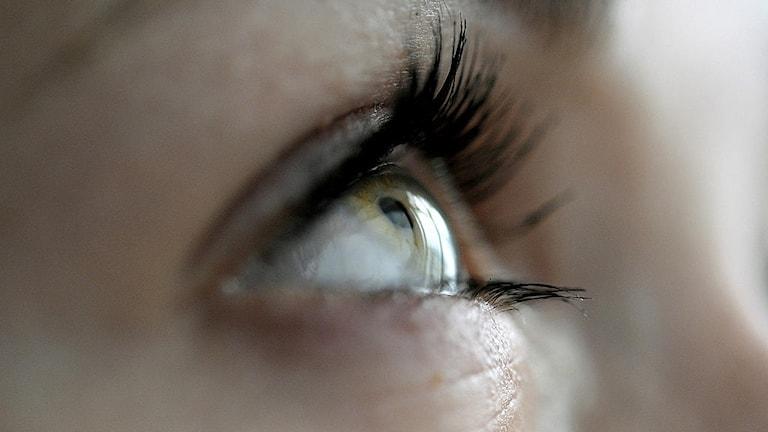 Närbild på öga