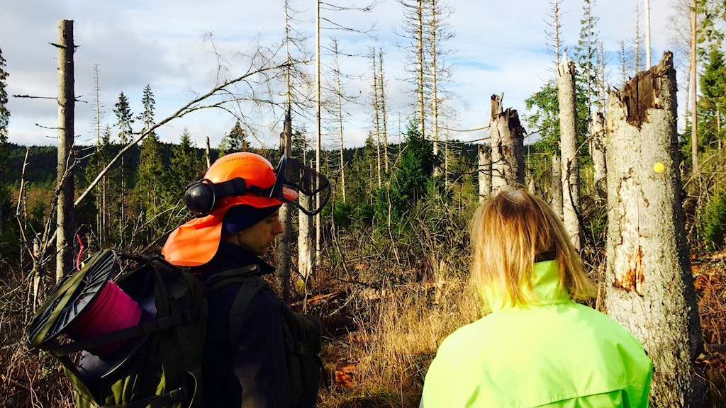 Anton Holmström och Annika Blad framför prängda träd