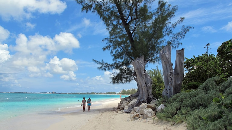 En strand med palmer och turkost vatten