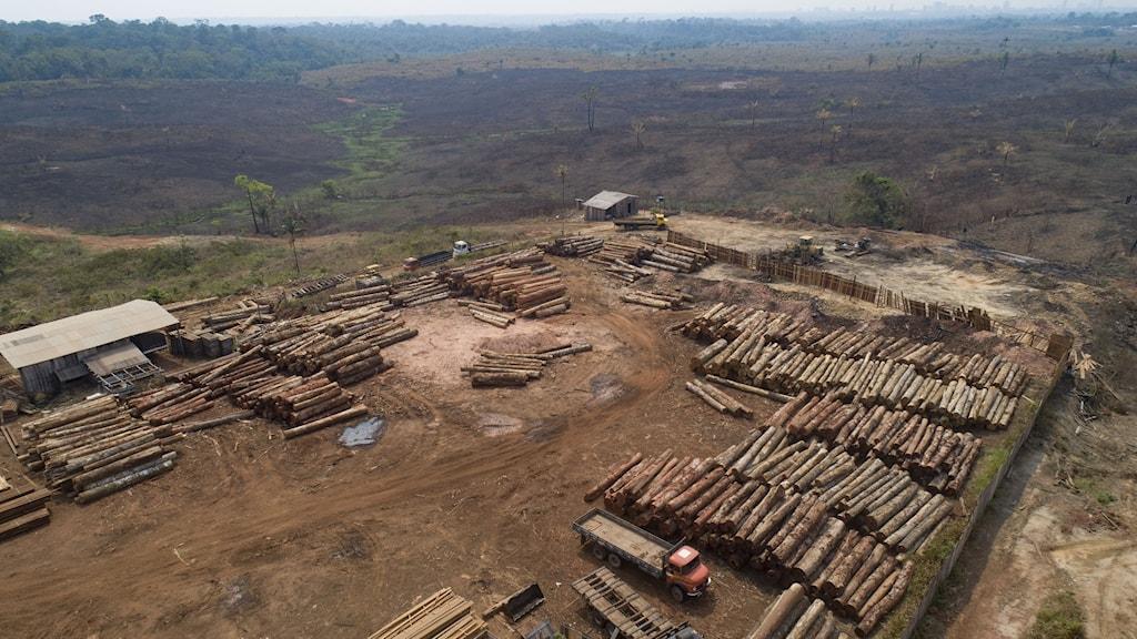 Högar med avverkade träd, med kalhyggen och Amazonas regnskog i bakgrunden.