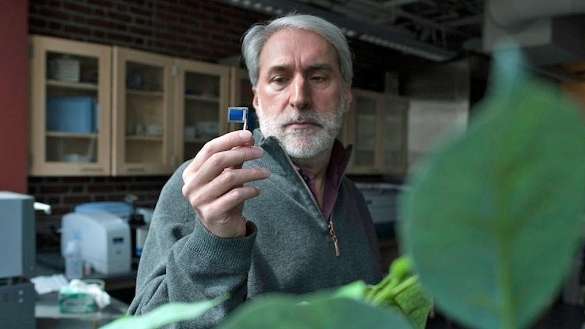 Daniel Nocera  håller upp ett fyrkantigt blad