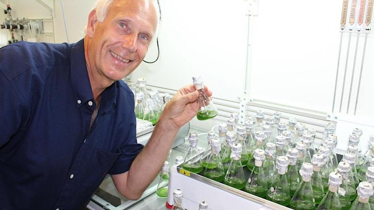 Peter Lindblad, professor i mikrobiell kemi vid Uppsala universitet, håller i en flaska med en odling av cyanobakterier.