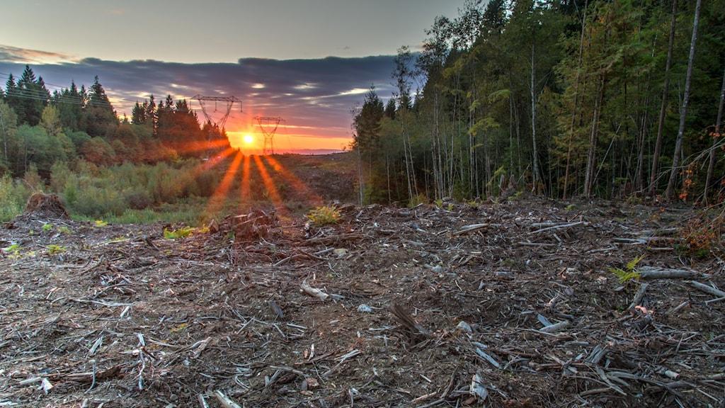 Plöjd skogmark och skog. I bakgrunden syns kraftledningar.