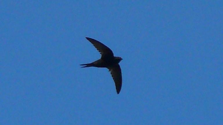 ensam fågel i luften