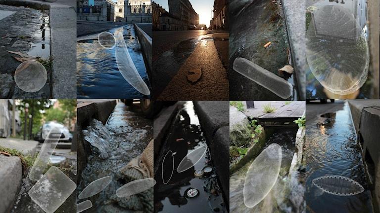 Tio små bilder med olika gator och olika former av mikroskopiska djur pålagda på bilden.