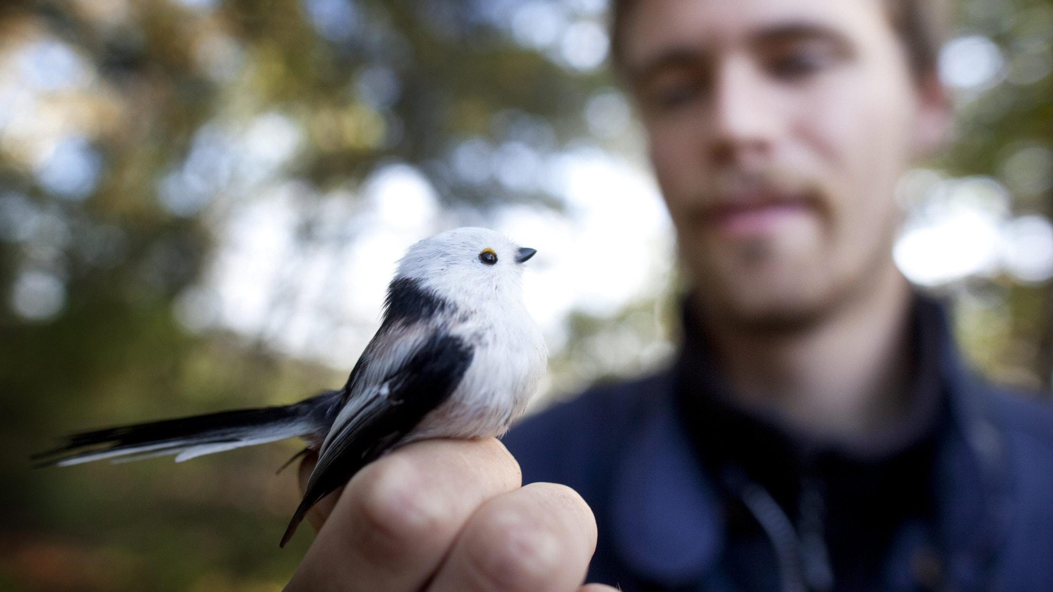 Englands fågelfauna påverkas av klimatförändringar