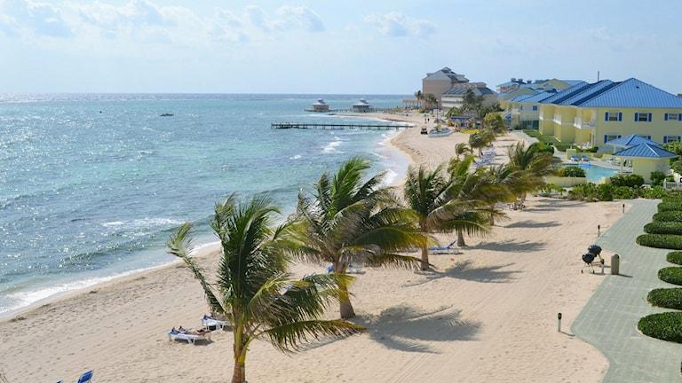 palmer och strand