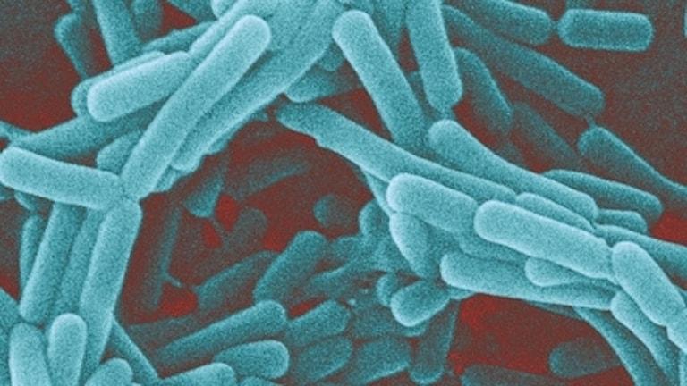 mikroskopbild av förstorade bakterier