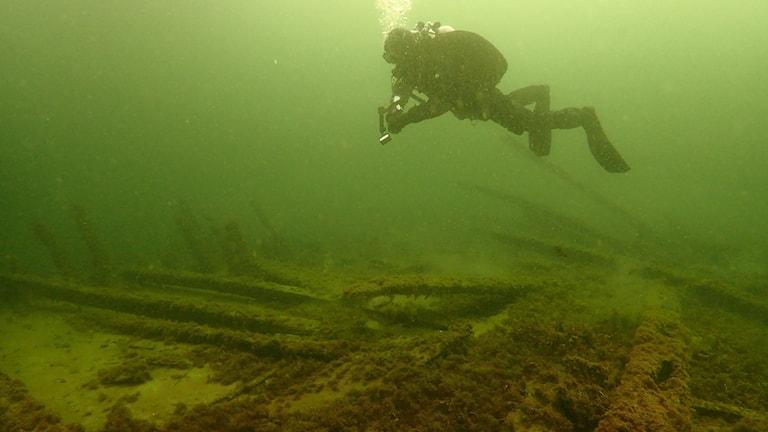 Dykare i grönt vatten ovanför vrak på havsbotten