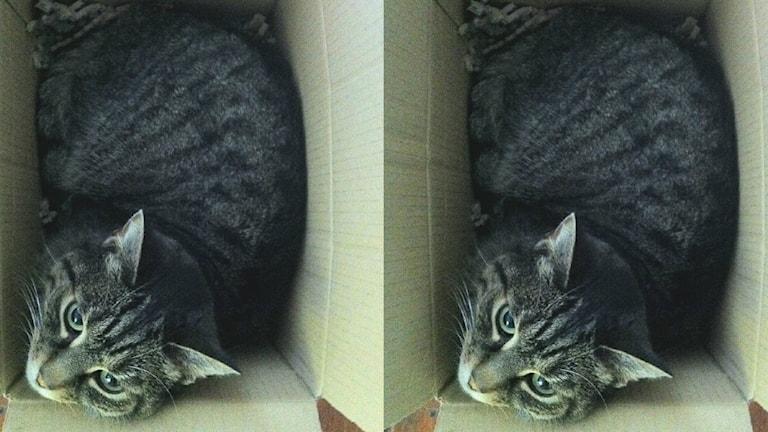 En bild på en katt i en låda. Samma fotografi av katten syns två gånger i bilden.
