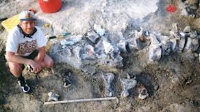 En bild från en utgrävning, en medlem av forkarteamet bredvid benrester.