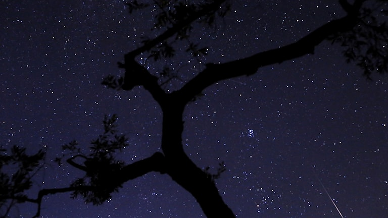 Bild på stjärnhimmel med meteorfall.