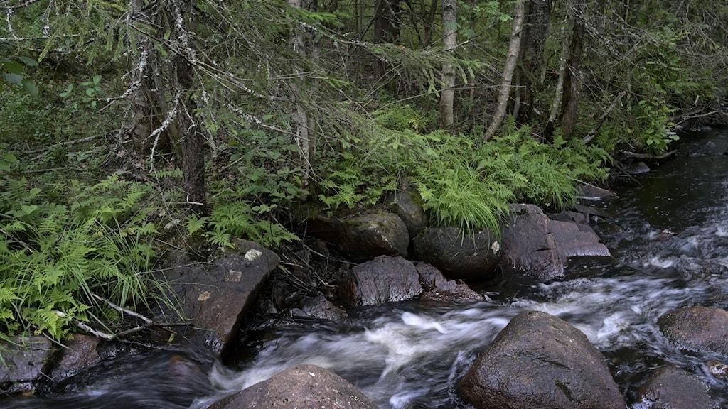 Vattendrag i skog.