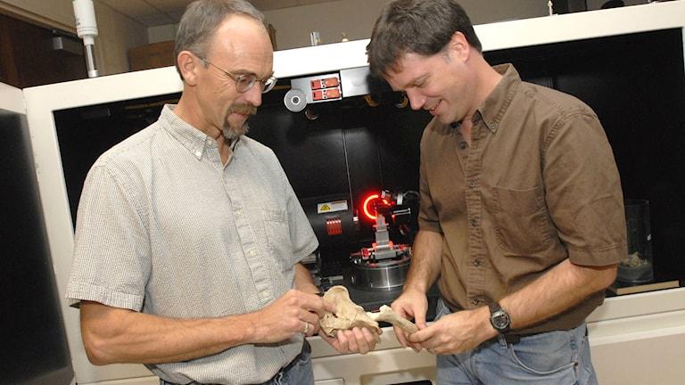 Två forskare som har undersökt förmänniskan Lucys fossil.