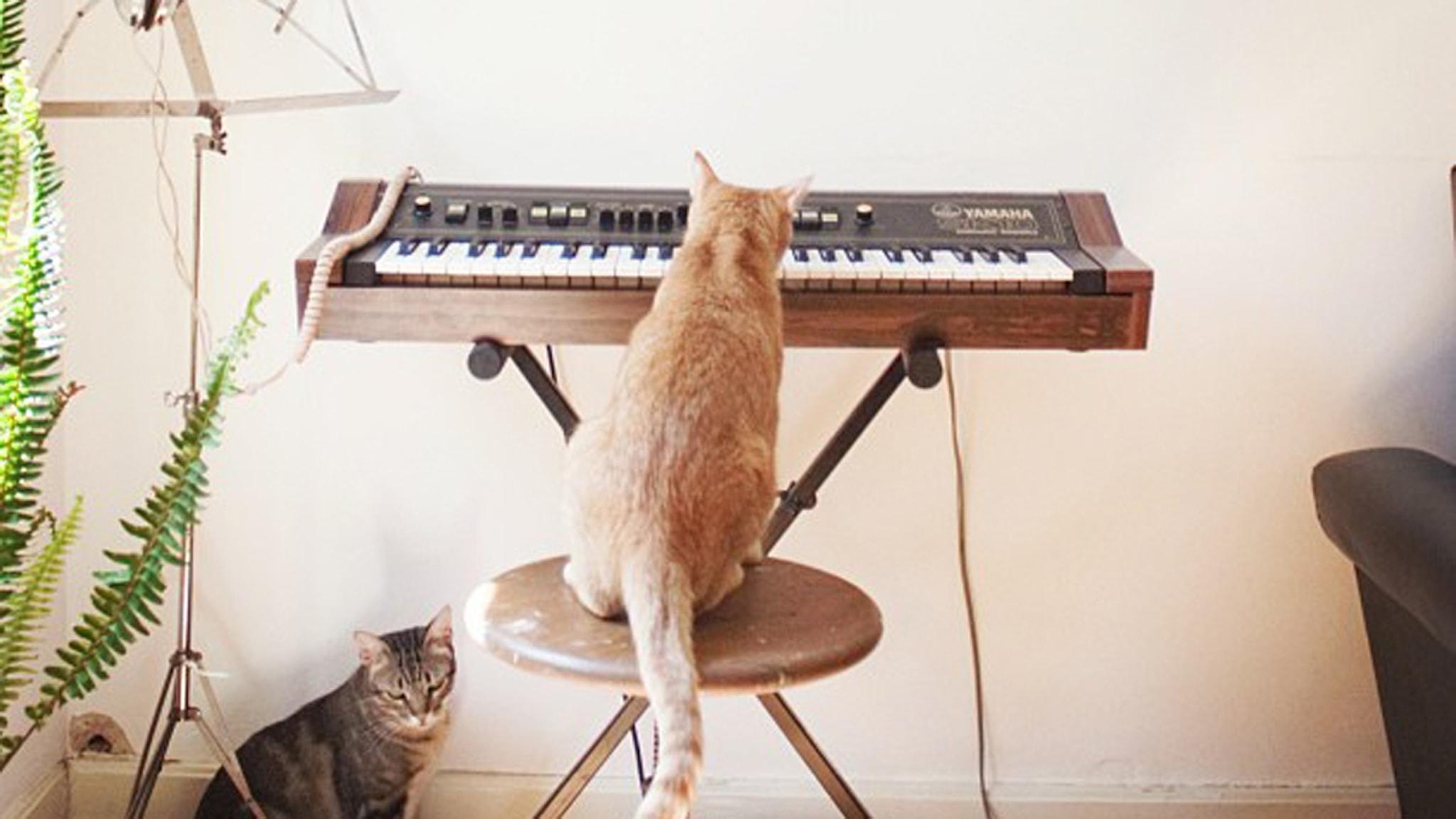 Kattmusik