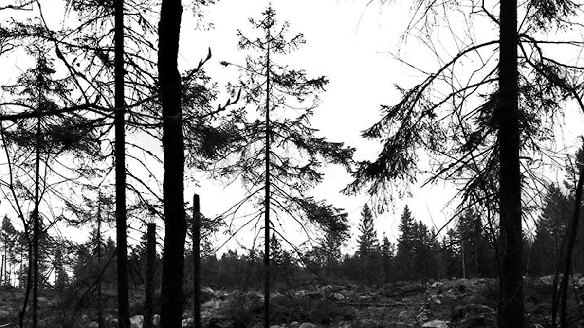 Random karg skog