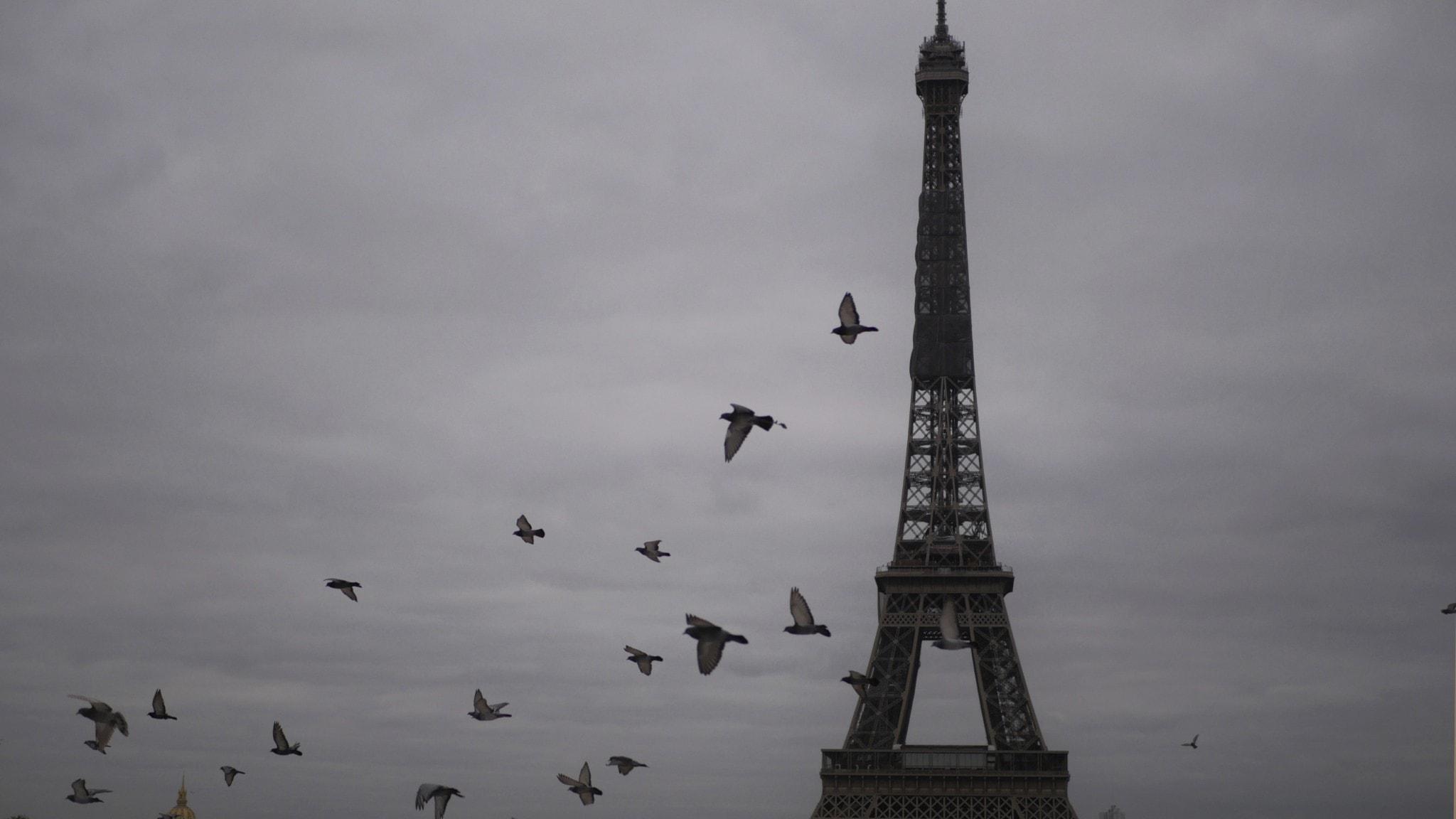 Passa på att bygga Eiffeltornet under julhelgen - i brädspelet Paris.