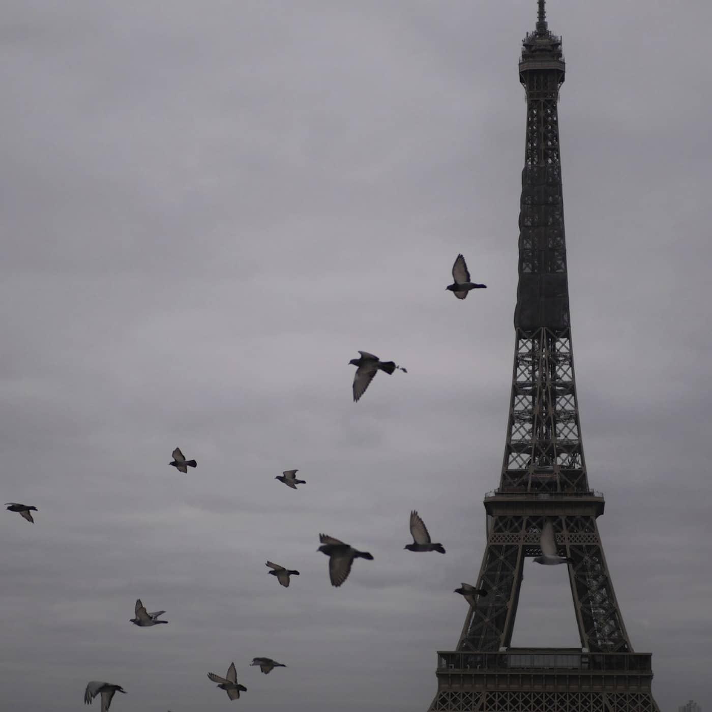 Bygg Eiffeltornet och erövra England – julklappsböcker och spel i Vetenskapsradion Historia
