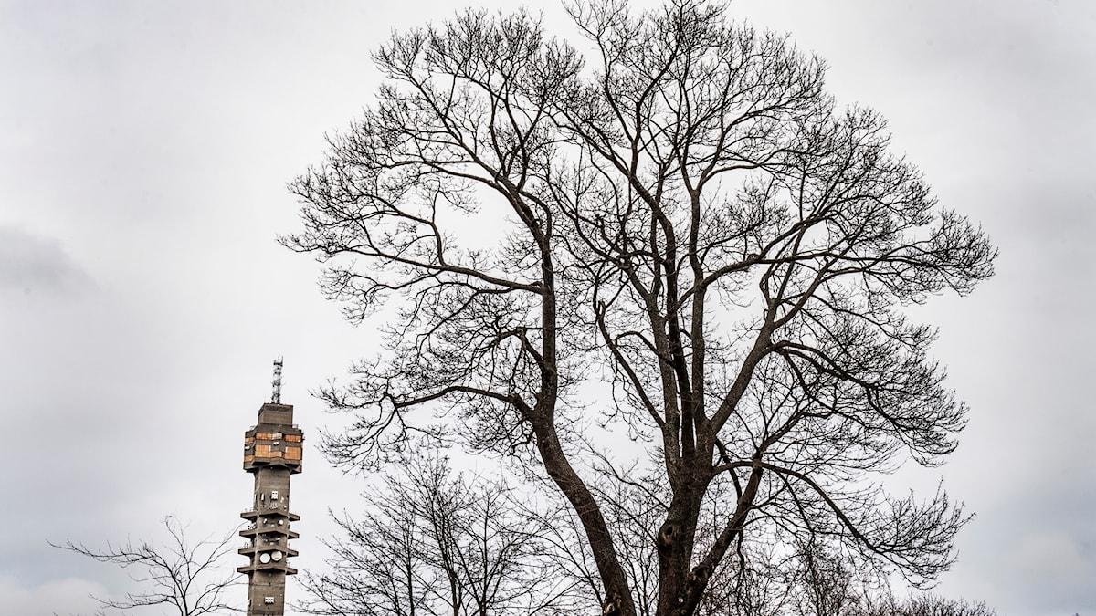 Ifrån Kaknästornet blickar Vetenskpasradion Historia ut över medeltidens nationalstadspark.