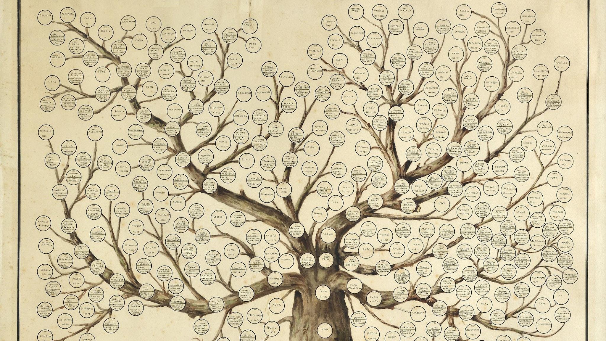 Med DNA-träffar växer släktträdet så det knakar!
