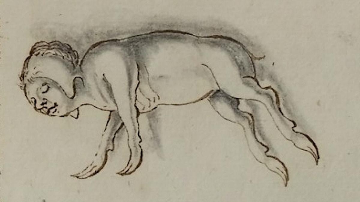Lilleberedsmonstret från 1668.