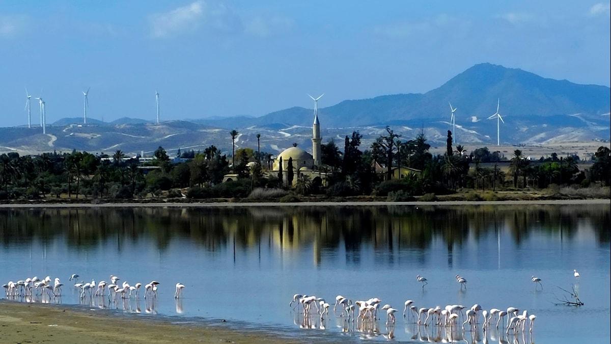 Vid Hala Sultan Tekke-moskén på Cypern undersöker svenska arkeologer en förstörd bronsåldersstad.