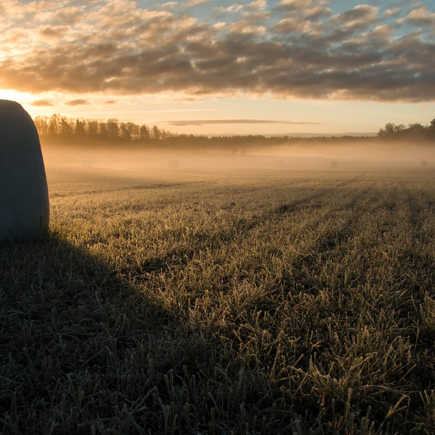 Är svenskt jordbruk bidragsberoende?
