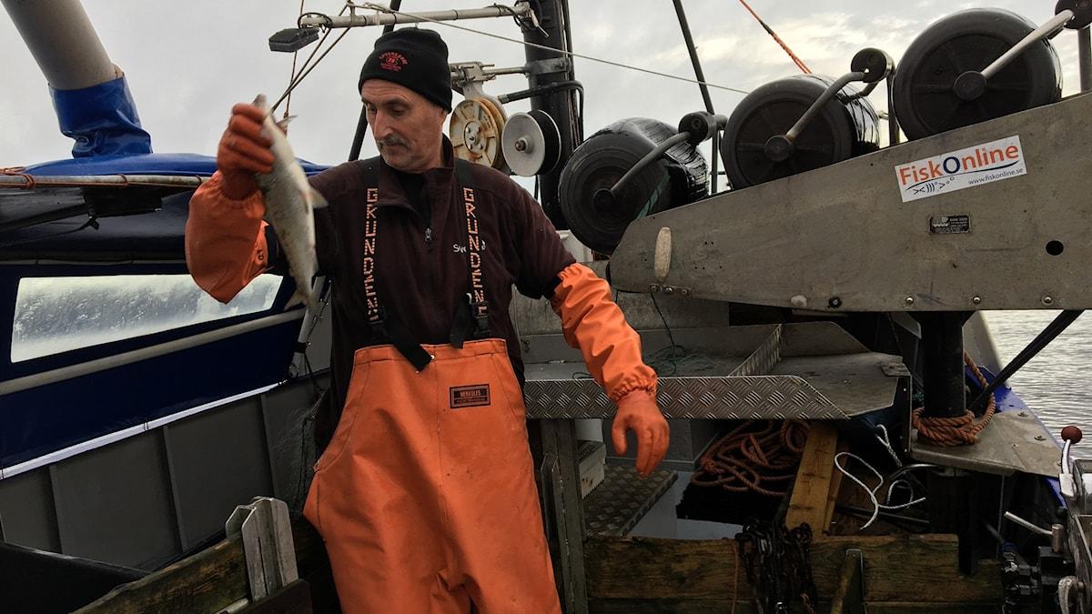 Fiskaren Bengt Larsson med en fisk i handen på sin fiskebåt