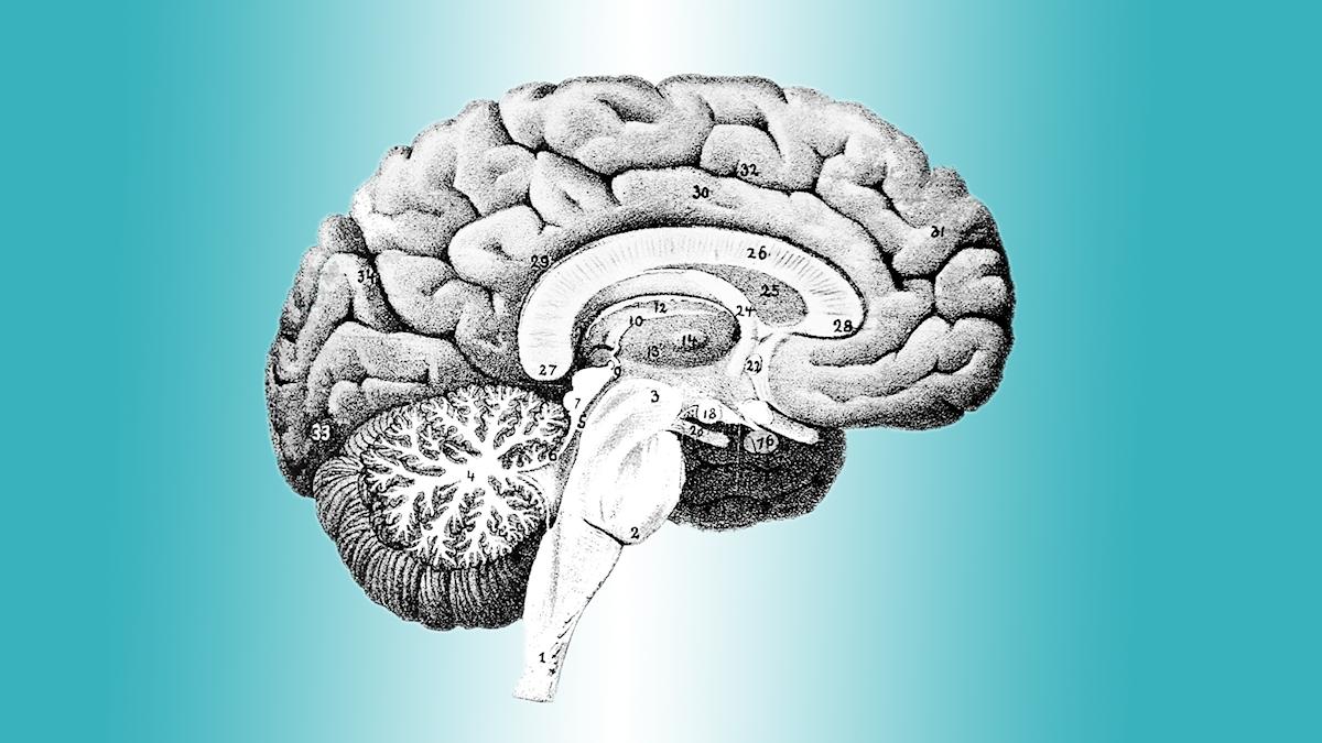 Språket hjärna