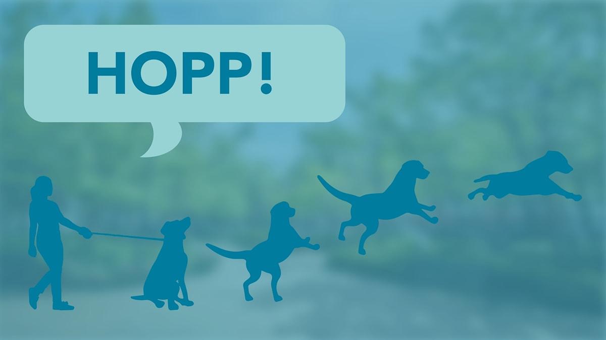 Hund hoppa
