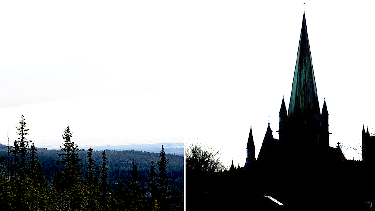 Skog och kyrka