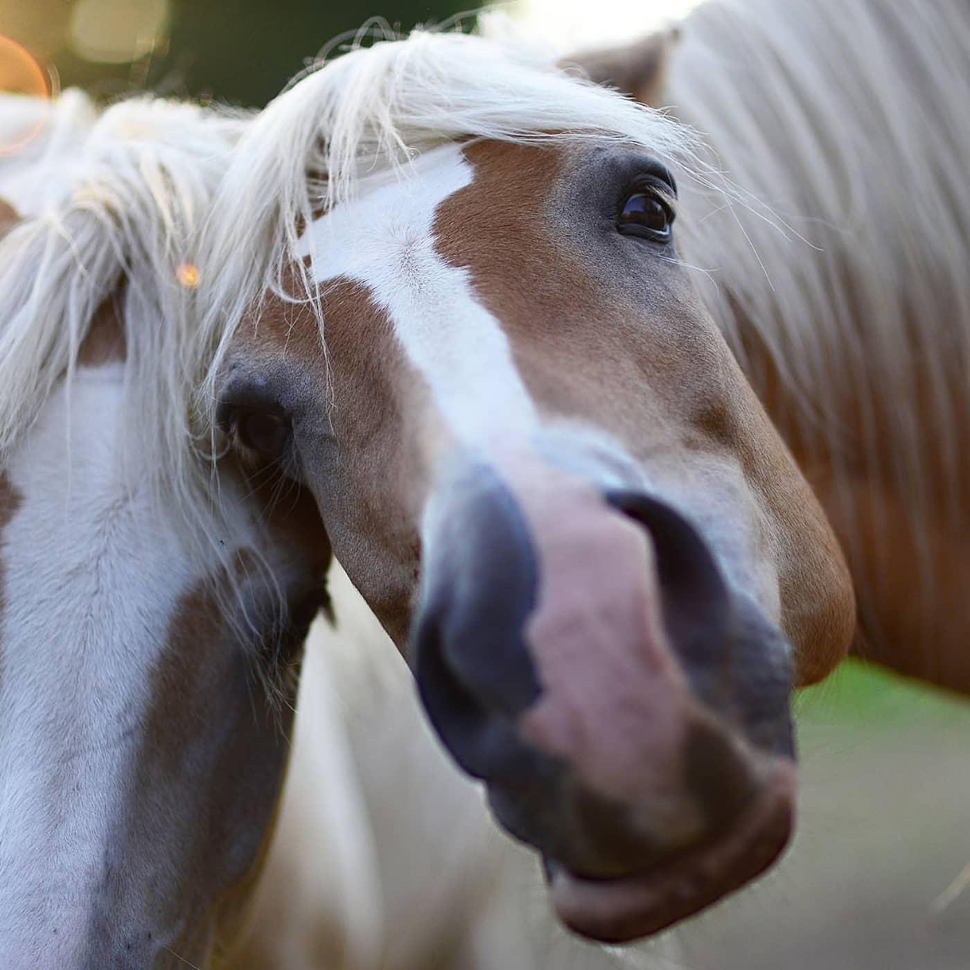 Kan vi tala med hästar?