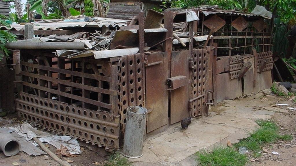 Moderna fossil förlöser gömda minnen på Kuba